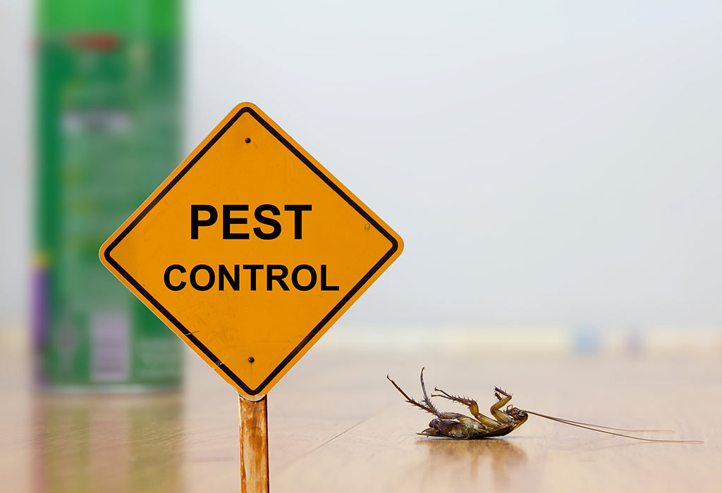 Pests and The Threats in Their Existence in the Kitchen