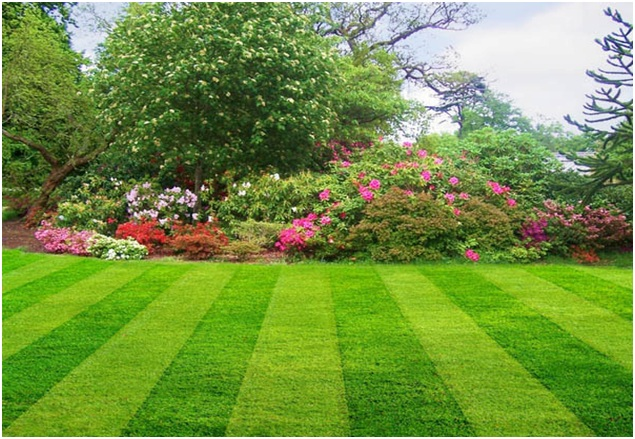 Best 'Do It Yourself Care Tips' For A Beautiful Lawn