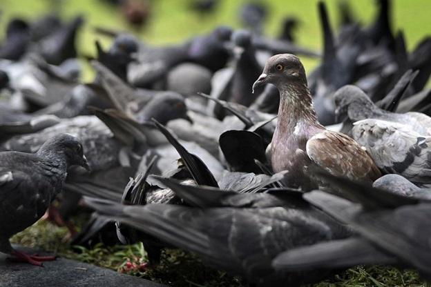 How Bird Pests Impact Home Hygiene
