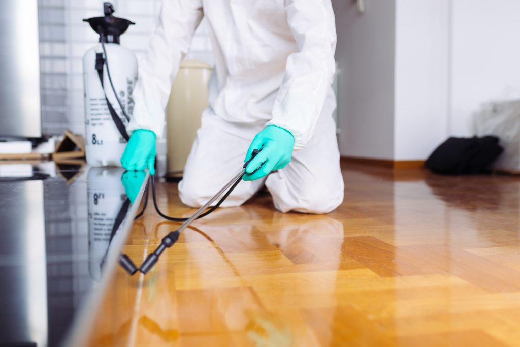 What Is Organic Pest Control?